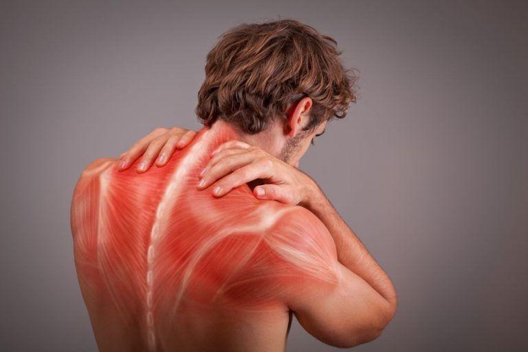 Muskeln oberer Rücken Mann