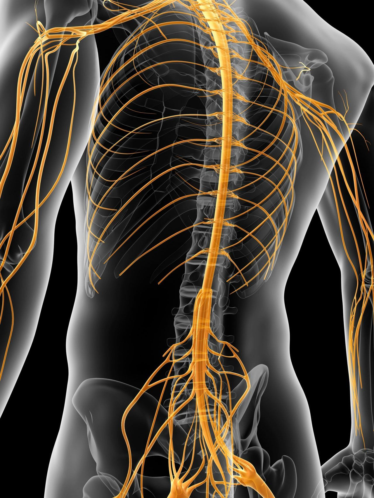Nervensystem transparenter Mann