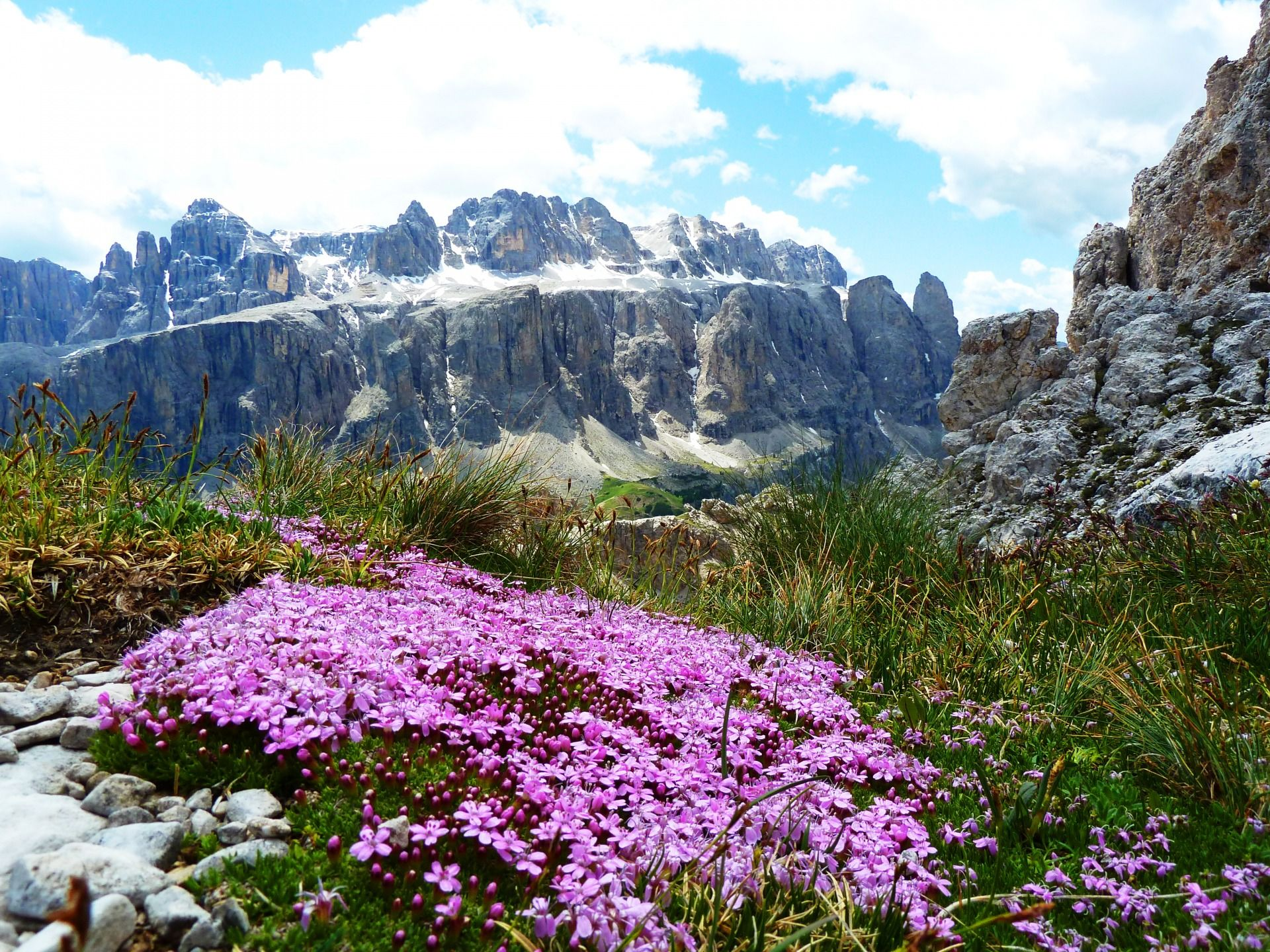 Rosa Blumen und Berglandschaft im Hintergrund